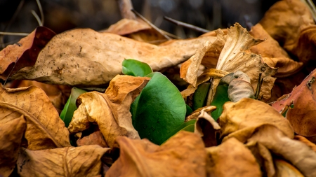 Green plant makes the way through the fallen, dead leaves yellowed. It symbolizes the birth, life, death. Stock Photo