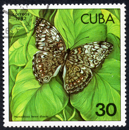 UKRAINE - CIRCA 2017: A stamp printed in Cuba, shows of a butterfly Hamadryas ferox diasia close-up, circa 1982 Editorial