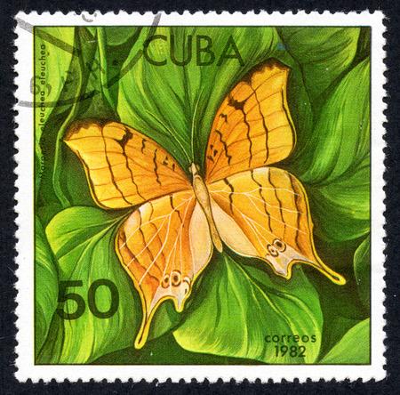 UKRAINE - CIRCA 2017: A stamp printed in Cuba, shows of a butterfly Marpesio eleuchea eleuchea close-up, circa 1982 Editorial