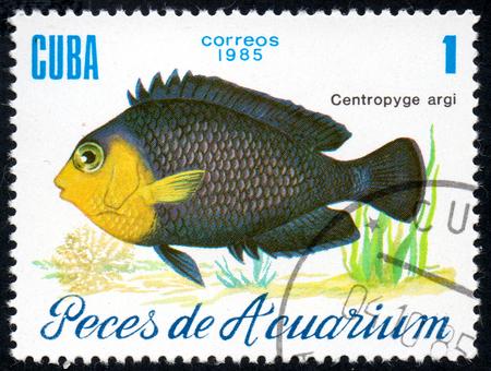 UKRAINE - CIRCA 2017: A stamp printed in Cuba, shows aquarium fish Centropyge argi close-up, circa 1985