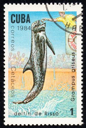 UKRAINE - CIRCA 2017: A stamp printed in Cuba, shows the Rissos dolphin Grampus griseus, circa 1984 Editorial