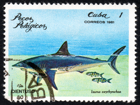 comprise: UKRAINE - CIRCA 2017: A stamp printed in Cuba, shows the Pelagic Fish Isurus oxyrhynchus, circa 1981