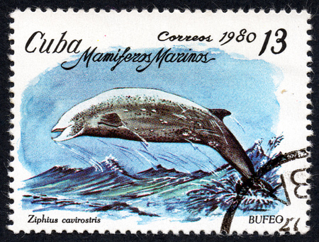 comprise: UKRAINE - CIRCA 2017: A stamp printed in Cuba, shows the a dolphin Bufeo (Ziphius cavirostris) the series Sea mammals, circa 1980 Editorial