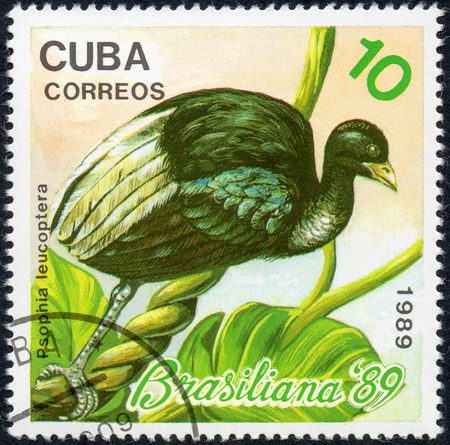 UKRAINE - CIRCA 2017: A stamp printed in Cuba, shows a bird White-winged trumpeter Psophia leucoptera, the series Brasiliana 89, circa 1989