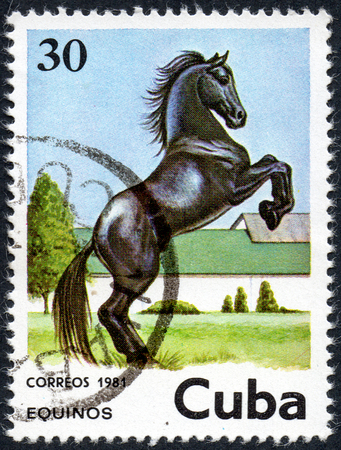 UKRAINE - CIRCA 2017: A stamp printed in Cuba, shows beautiful black horse, the series Horses, circa 1981