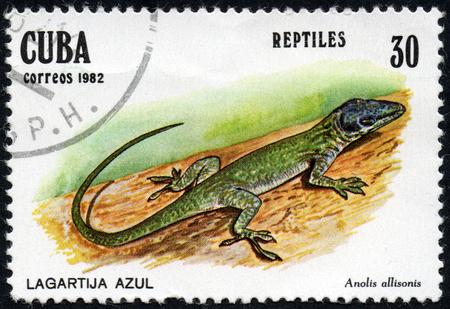 UKRAINE - CIRCA 2017: A stamp printed in Cuba, shows Blue lizard Anolis allisonis, the series Reptiles, circa 1982