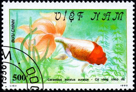 carassius auratus: VIETNAM - CIRCA 2017: A Stamp printed in Vietnam shows beautiful fish Carassius auratus auratus, series Goldfish, circa 1990