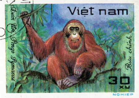 comprise: VIETNAM - CIRCA 2017: A Stamp printed in Vietnam shows monkey Orangutan Pongo Pygmaeus, series Animals, circa 1981