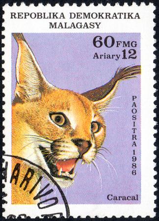 UKRAINE - CIRCA 2017: A stamp printed in Malagasy Madagascar, shows Steppe lynx Caracal, circa 1986