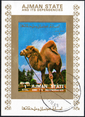 UKRAINE - CIRCA 2017: A stamp printed in AJMAN STATE and its dependencies United Arab Emirates shows camel, series animals, circa 1973