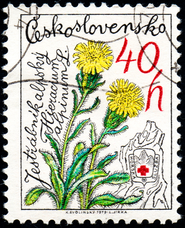 hawkweed: UKRAINE - CIRCA 2017: A stamp printed in Czechoslovakia shows Alpine Hawkweed Hieracium alpinum, from series Nature Protection, circa 1979 Editorial