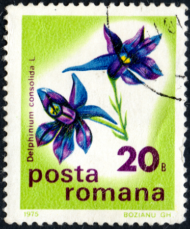 UKRAINE - CIRCA 2017: A postage stamp printed in Romania shows flower Larkspur Delphinium consolida, from series Flowers, circa 1975