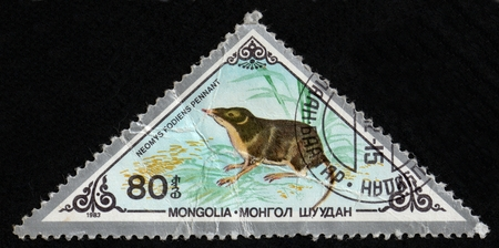 UKRAINE - CIRCA 2017: A postage stamp printed in Mongolia shows Eurasian Water Shrew Neomys fodiens, from series Various mammals, circa 1983
