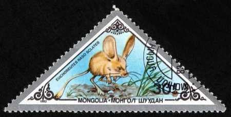 UKRAINE - CIRCA 2017: A postage stamp printed in Mongolia shows Long-eared Jerboa Euchoreutes naso, from series Various mammals, circa 1983