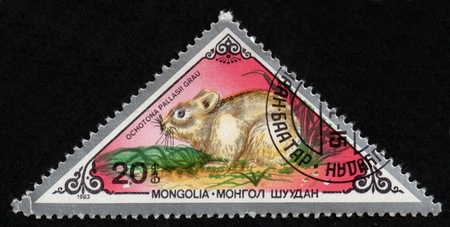 UKRAINE - CIRCA 2017: A postage stamp printed in Mongolia shows Pallass Pika Ochotona pallasi, from series Various mammals, circa 1983