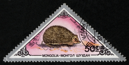 UKRAINE - CIRCA 2017: A postage stamp printed in Mongolia shows European Hedgehog Erinaceus europaeus, from series Various mammals, circa 1983