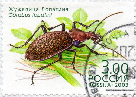 Ukraine - vers 2017: Un timbre imprimé en Russie montre Beetle Carabus Lopatini, série Insectes, vers 2003