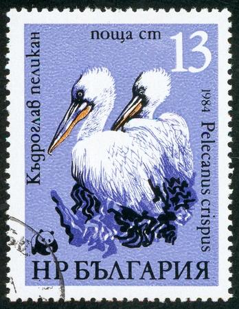 UKRAINE - circa 2017: A postage stamp printed in Bulgaria shows Dalmatian Pelican Pelecanus crispus, series WWF Pelicans, circa 1984