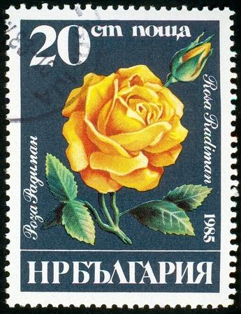 UKRAINE - circa 2017: A postage stamp printed in Bulgaria shows Rosa radiman, Series Roses, circa 1985 Editorial