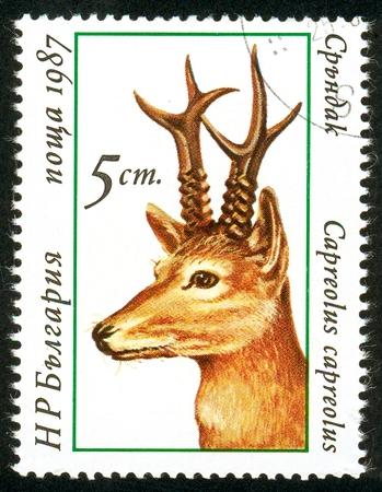 UKRAINE - circa 2017: A postage stamp printed in Bulgaria shows Roebuck, Capreolus capreolus, Series Deers, circa 1987