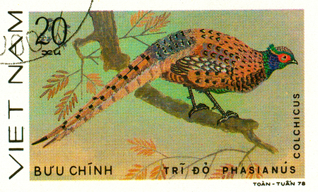 Ukraine - circa 2018: A postage stamp printed in Vietnam shows drawing Common Pheasant - Phasianus colchicus. Series: Pheasants. Circa 1978.