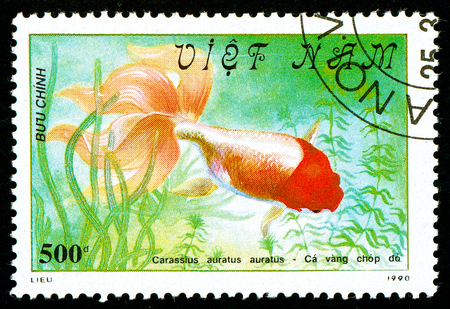 Ukraine - circa 2018: A postage stamp printed in Vietnam shows drawing fish Red-headed Oranda or Carassius auratus auratus. Series: Fish - Goldfish, Veil-tailed. Circa 1990 Editorial