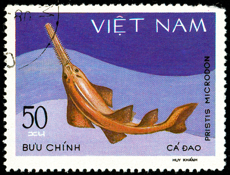 Ukraine - circa 2018: A postage stamp printed in Vietnam shows drawing Largetooth Sawfish or Pristis microdon. Series: Shark and Dogfish. Circa 1980.