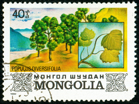 Ukraine - circa 2018: A postage stamp printed in Mongolia shows Poplar Euphrates or Populus diversifolia. Series: Flora. Series: Flora. Circa 1982.
