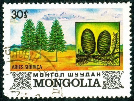 Ukraine - circa 2018: A postage stamp printed in Mongolia shows Siberian fir or Abies sibirica. Cone. Series: Flora. Series: Flora. Circa 1982. Éditoriale