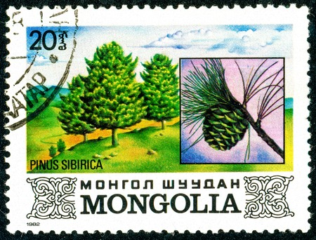 Ukraine - circa 2018: A postage stamp printed in Mongolia shows Siberian pine or Siberian stone pine. Cone. Pinus sibirica. Series: Flora. Series: Flora. Circa 1982. Éditoriale