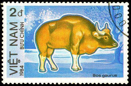 Ukraine - circa 2018: A postage stamp printed in Vietnam show bull Gaur or Bos gaurus. Series: Endangered Animals.Circa 1984.