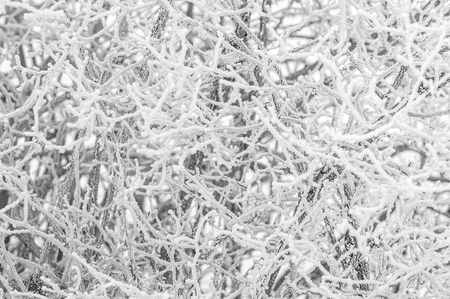 Misty winter day. Frost. The branches were covered with hoarfrost. Soft focus Banque d'images