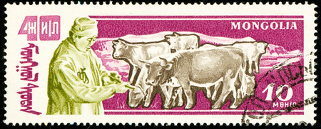 Ukraine - circa 2018: A postage stamp printed in Mongolia show Herd of cows. Cattle or Bos primigenius taurus. Cattle breeding. Series: Anniversary of the victory of the popular republic. Circa 1961 Sajtókép
