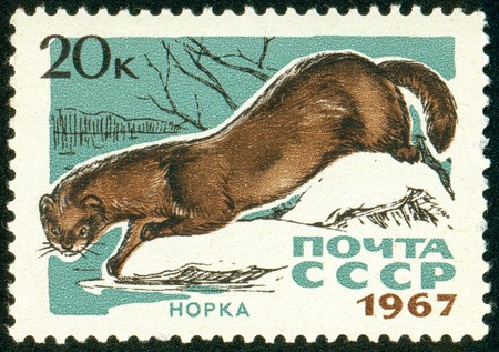 Ukraine - circa 2018: A postage stamp printed in USSR show Mink or Lutreola lutreola. Series: Fur-bearing Animals. Circa 1967. The postage stamp is not used. Soviet Union ceased to exist in 1991