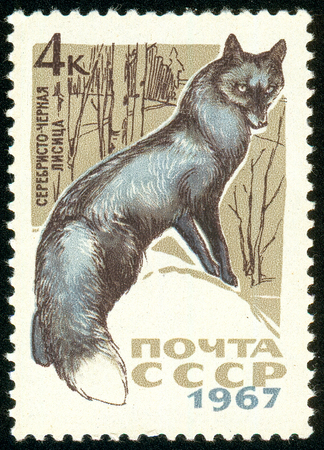 Ukraine - circa 2018: A postage stamp printed in USSR show Silver Fox or Vulpes vulpes var. Series: Fur-bearing Animals. Circa 1967. The postage stamp is not used. Soviet Union ceased to exist in 1991