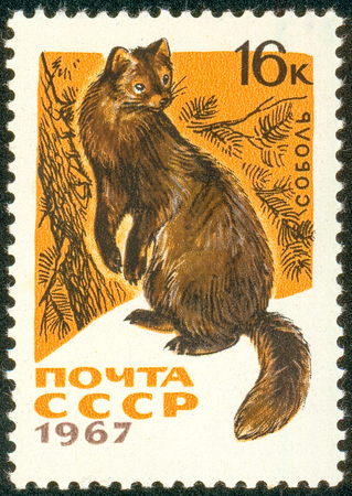 Ukraine - circa 2018: A postage stamp printed in USSR show Sable or Martes zibellina. Series: Fur-bearing Animals. Circa 1967. The postage stamp is not used. Soviet Union ceased to exist in 1991.