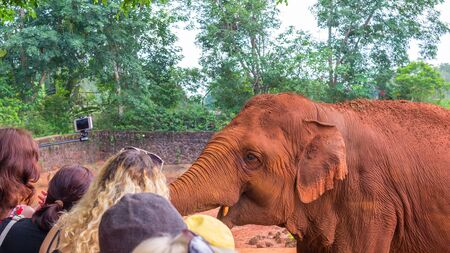 A friendly auburn elephant in Safari Park China communicates with visitors. Close-up view