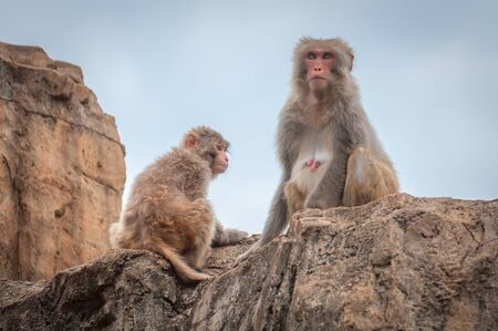 An adult female macaque with her cub is sitting on a cliff top