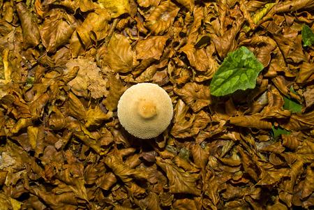 The autumn season in the Umbra Forest, Gargano, Apulia, Italy Фото со стока
