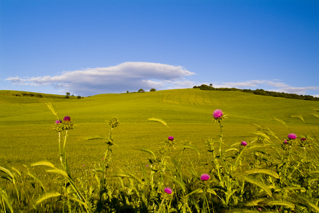 Landscape with hills, Apulia, Southern Italy 스톡 콘텐츠