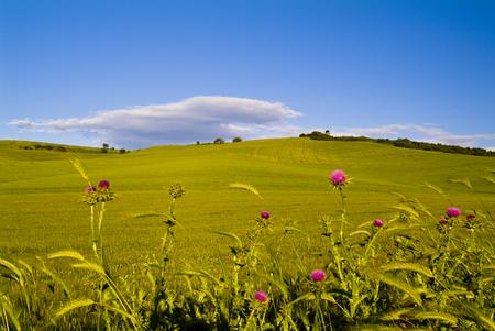 Landscape with hills, Apulia, Southern Italy Фото со стока