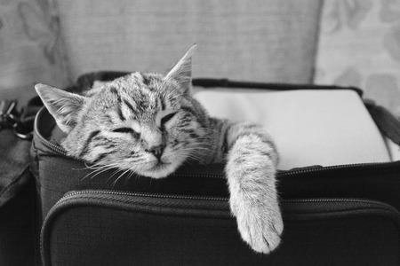 beg: cat sleeping in beg