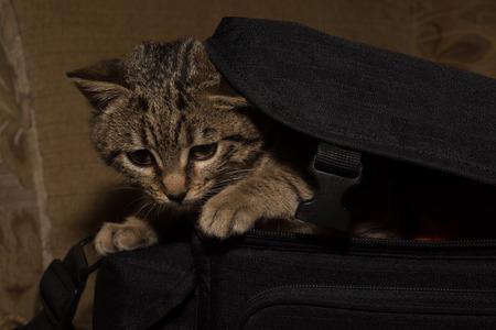 beg: little kitty in beg Stock Photo