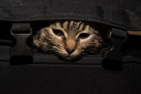 beg: Cat hidding in beg