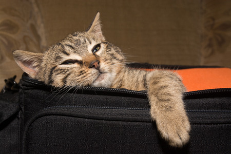 beg: Cat in beg Stock Photo