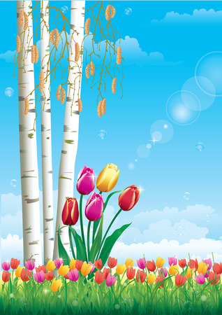agriculture wallpaper: spring landscape with tulips and birch trees