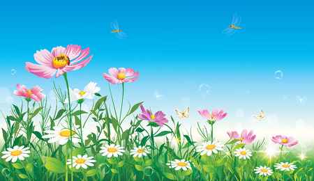 flowery meadow on background of blue sky