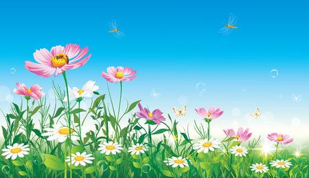 Prairie fleurie sur fond de ciel bleu Banque d'images - 37492664
