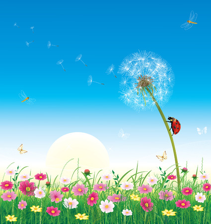 summer meadow with flowers Vector