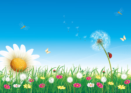 Summer meadow with daisies and dandelions